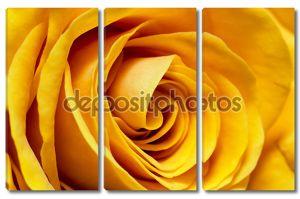 Желтые розы крупным планом