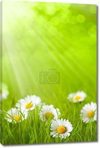 Весна поля - Дейзи в траве