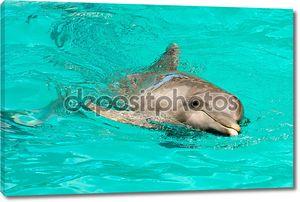 Дельфин плавание в воде