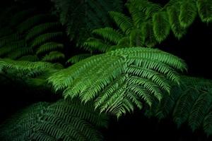 Изумрудные листья