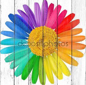 Вектор разноцветные ромашки, ромашка цветок изолированные