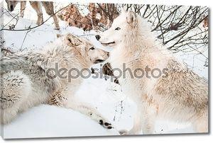 Волки в снежном лесу