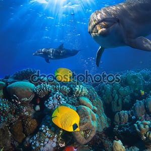 Подводные сцены с двумя дельфинами и желтые рыбы с коралловыми фоном