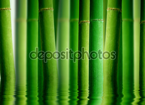 Бамбуковый лес с водой-отражения