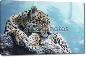 jaguar находится в Московском зоопарке