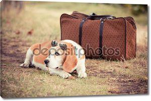 Собака с старые старомодный чемодан и солнцезащитные очки