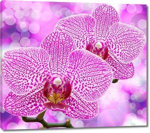 Орхидея пятнистая