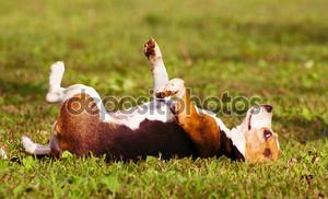 день мечты собаки, на траве