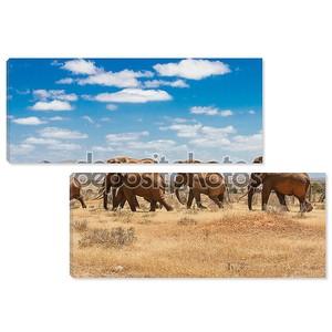 слоны, Тсаво Национальный парк Кении