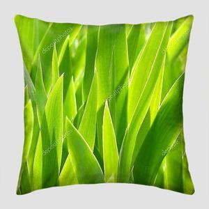 Изумрудная трава