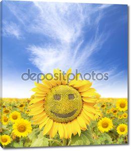 Улыбающееся лицо подсолнечника на летнее время