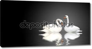 Два лебедя на черном фоне