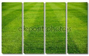 Стриженое футбольное поле