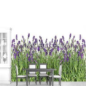 Свежие цветы Лаванда, изолированные на белом фоне