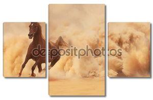 Аравийская лошадь на исходе Буря в пустыне