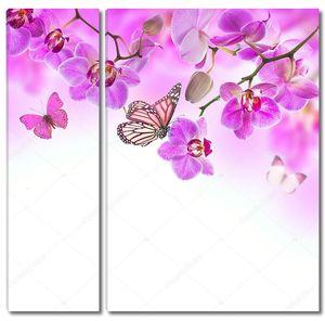 Цветочный фон тропических орхидей и бабочек