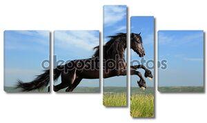 Красивый черный конь, играя на поле