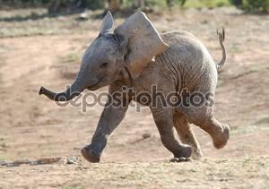 Baby слон работает