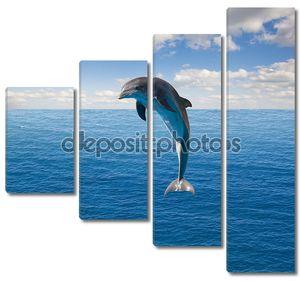 один прыгает Дельфин