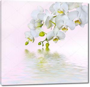 Красивая ветка белой орхидеи