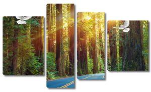 Голубая дорога в лесу