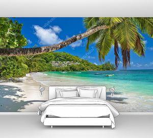 Пальмы на Сейшельских островах