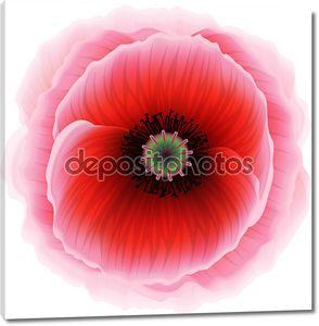 Красный цветок мака