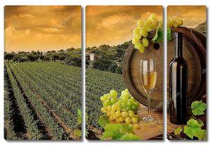 вино, виноград и виноградник заката