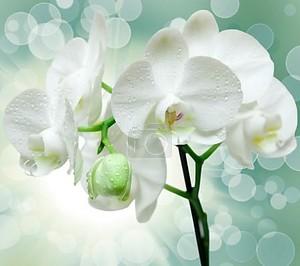 Крупным планом цветок орхидеи