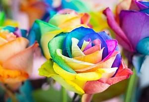 Разноцветные розы