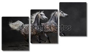 Две серые аравийских лошадей галопом на темном фоне