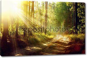 Красивая сцена туманный старый лес с лучами солнца, тени и туман