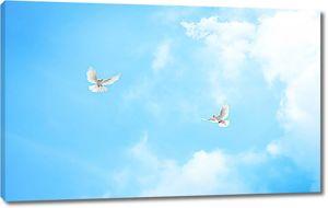 Небо с голубями