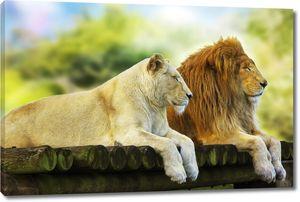Лев и львица отдыхает