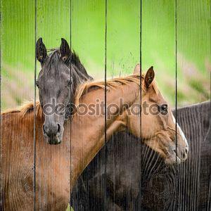 Две дружелюбные лошади