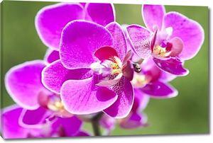 Розовая орхидея на зеленом фоне