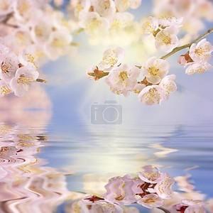 ветвь сакуры размышляла в воде