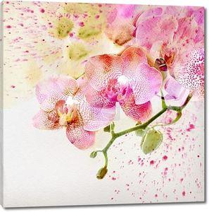 Акварельная живопись, цветочный фон