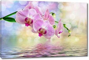 Розовые орхидея у воды