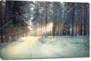 Сосновый лес зимой