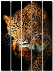 Леопарда портрет на черном фоне