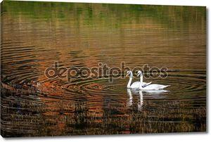 Два лебеди на озере с отражением лес