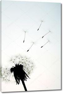 Семена и Dandlion