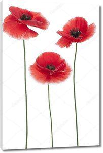 Три цветка мака