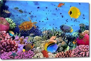 Фото коралловой колонии