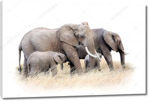 Пама мама и сынок слоны