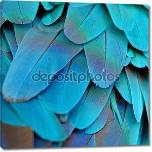 синий и Золотой Ара перья