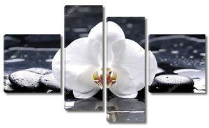 Белые орхидеи на черном камне с отражением