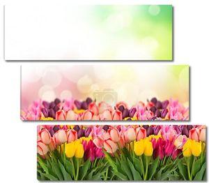 Весной тюльпаны на colofful Боке