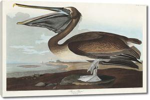Коричневый пеликан на одной ноге
